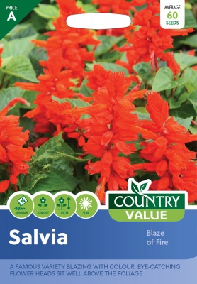 Salvia Seeds Blaze Of Fire by Country Value