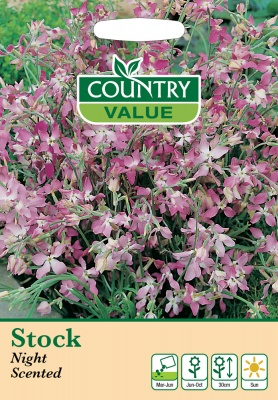 Stocks Night Scented Seeds by Country Value