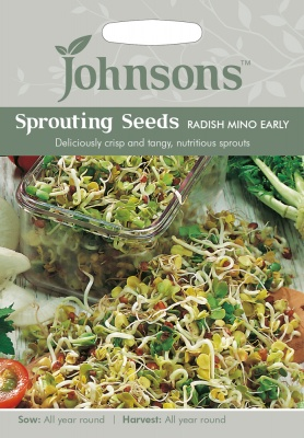 Sprouting Seeds Radish Mino Early by Johnsons