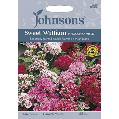 Sweet William Seeds 'Pinocchio Mixed' by Johnsons