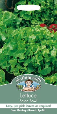 Lettuce Seeds 'Salad Bowl Green' by Mr Fothergill's