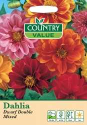 Dahlia Seeds Dwarf Double Mixed by Country Value