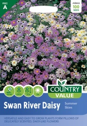 Swan River Daisy Seeds Summer Skies by Country Value