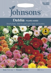 Dahlia Seeds Variety 'Figaro' Mixed By Johnsons