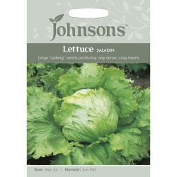 Lettuce 'Saladin' Iceberg Lettuce Seeds by Johnsons