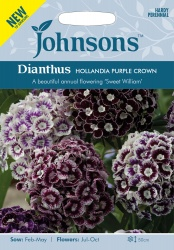 Dianthus Seeds 'Hollandia Purple Crown' by Johnsons