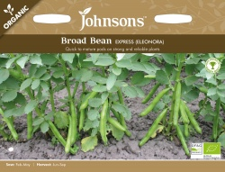 Organic Broad Bean Seeds Express Eleonora by Johnsons