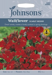 Wallflower Scarlet Bedder by Johnsons Seeds