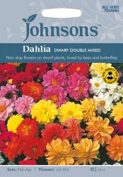Dahlia 'Dwarf Double Mixed' Seeds by Johnsons