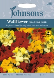 Wallflower Seeds 'Tom Thumb Mixed' by Johnsons