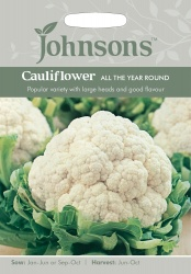 Cauliflower 'All The Year Round'