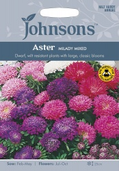 Aster 'Milady Mixed' Seeds by Johnsons