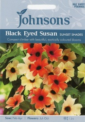 Black Eyed Susan Sunset Shades Seeds by Johnsons