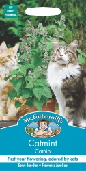 Catmint Catnip Seeds by Mr Fothergills