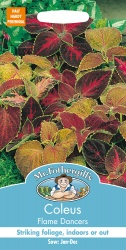 Coleus Flame Dancers Seeds by Mr Fothergill's