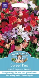 Sweet Pea Seeds 'Dwarf Explorer Mixed' by Mr Fothergill's