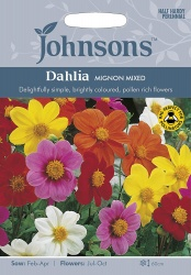 Dahlia Seeds Variety 'Mignon' Mixed